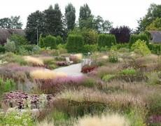 Как создать злаковый сад