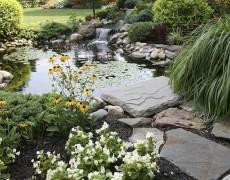 Какие водоемы можно обустроить на участке