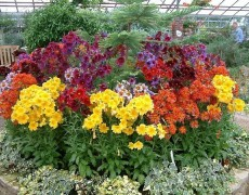 Красивые однолетние цветы для сада и клумб
