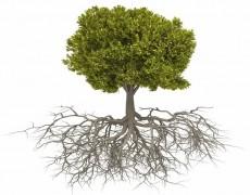 На каком расстоянии от дома сажать деревья?