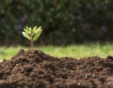 Как улучшить почву на участке?