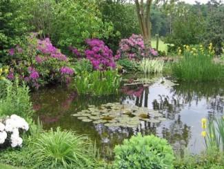 Схема расположения растений в садовом пруду (с примерами)