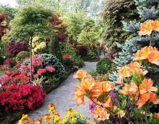Чтобы сад радовал круглый год