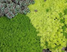 Лучшие почвопокровные растения для сада