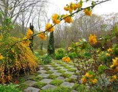 Декоративные весеннецветущие кустарники для участка