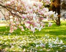 Декоративный сад – работы в мае