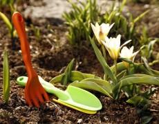 Генеральная уборка в декоративном саду: какие работы нужно сделать весной?