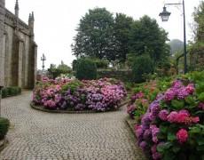 Идеальные места для посадки гортензий в саду