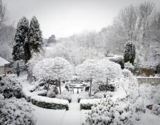Красивый сад и зимой и летом-возможно ли?