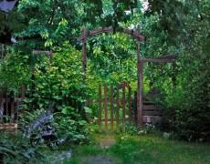 Многолетники для тени, в том числе и для северной стороны сада
