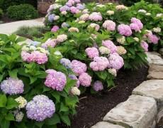 Обустройство монозон в декоративном саду