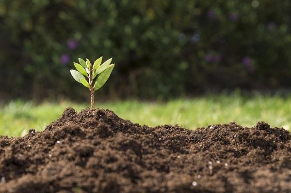 Почва – основа всего живого на нашей планете