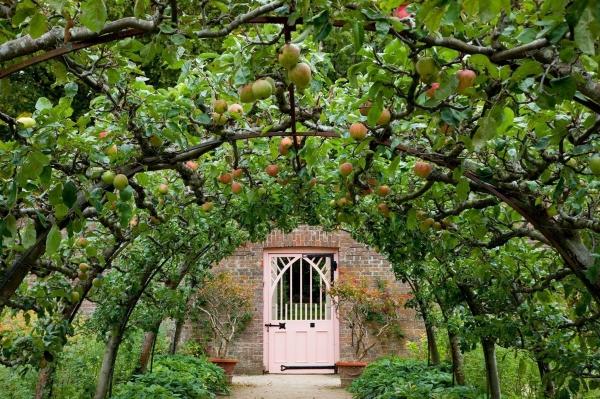 Фруктовый сад на арке