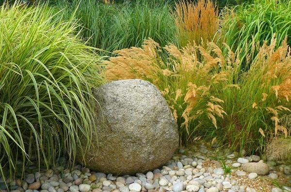 Комбинация злаков в саду