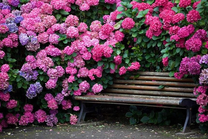 Уголок отдыха в саду