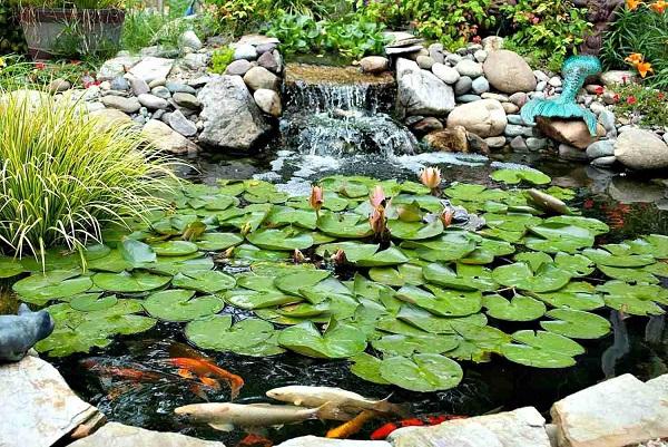 Водоем с лилиями и рыбами