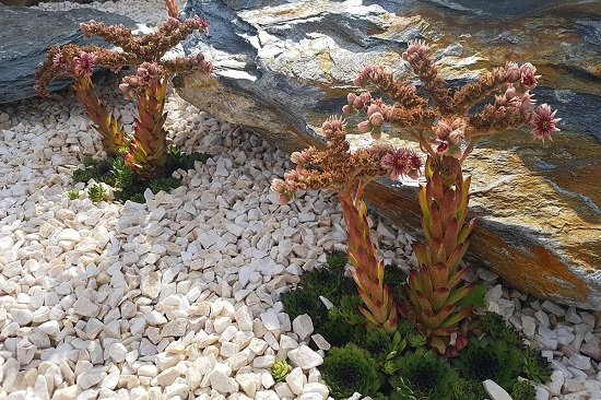 Пример декорирования клумбы мраморным щебнем